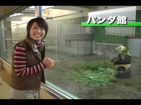 王子動物園のちょっと変わった楽しみ方