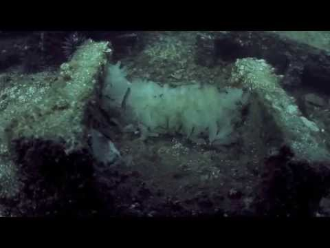 Octopus Hatching