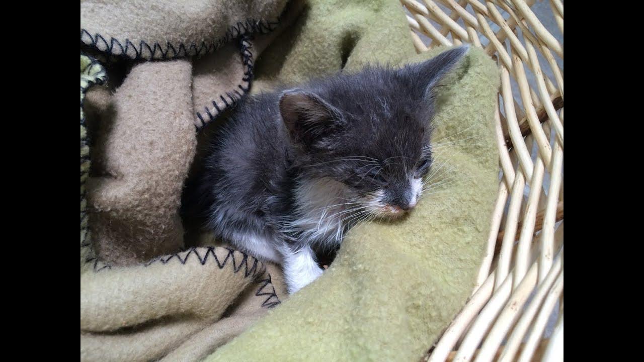 baby kitten rescue   youtube