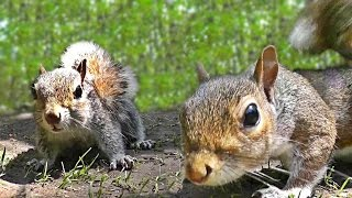 Videos for Cats to Watch - Squirrel Fun