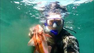 Spearfishing Maloneys Bay