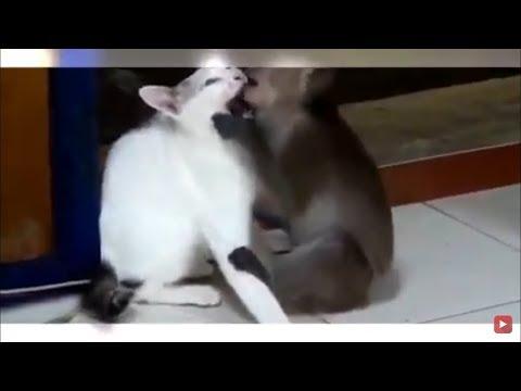 FUNNY ANIMAL VIDEOS COMPILATION | CUTE PET ANIMALS FUNNY VIDEOS