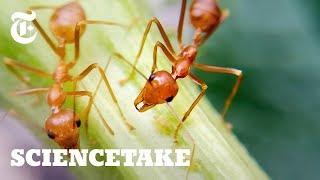 How Ants Avoid Traffic Jams | ScienceTake