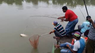 Fishing By Bait in Big Pond, Bangladesh