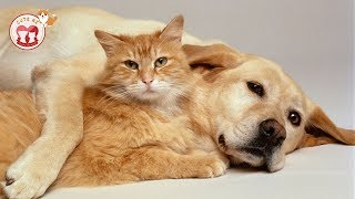 TOP HIGHLIGHTS of Dogs & Cats | VERY FUNNY ANIMALS