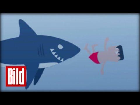 Hai-Angriff - So überleben Sie Die Attacke ( Ratgeber / Tipp / Hinweis  / Tauchen / Urlaub)