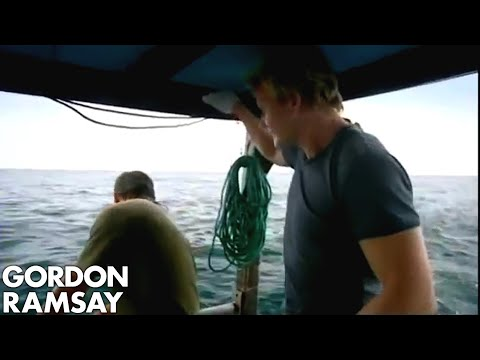 Shark Bait, Long line fishing - Gordon Ramsay