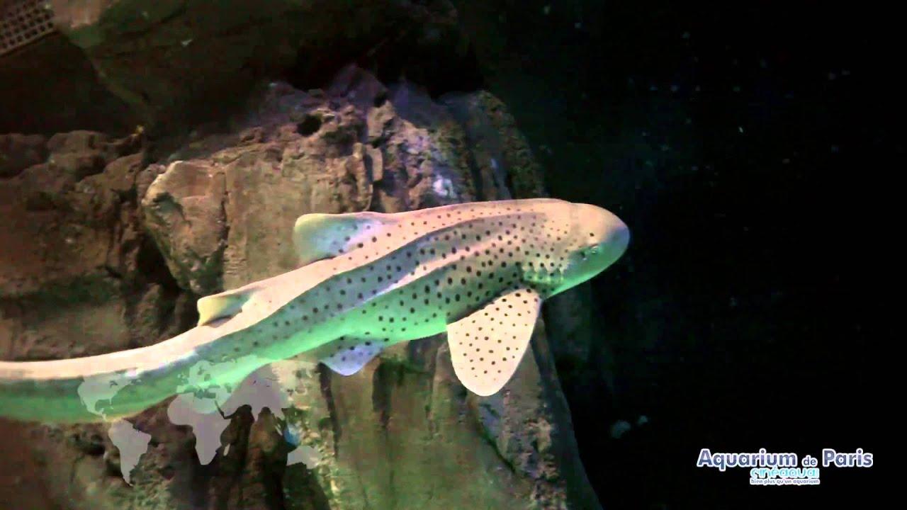 L 39 aquarium de paris requin z bre youtube for Aquarium de paris jardin du trocadero
