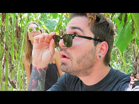 TRAPPED IN SUNFLOWER MAZE! (5.21.16 - Day 2578)