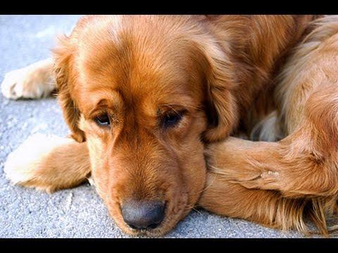 3 años es demasiado tiempo sin que este perro vea a su amo