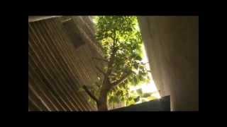 Ngôi nhà phủ kín cây xanh (P.2)