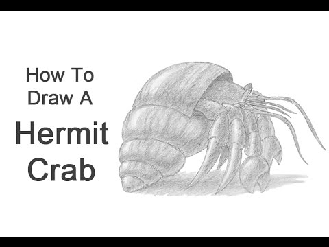 Hermit Crab Drawing How to Draw a Hermit Crab