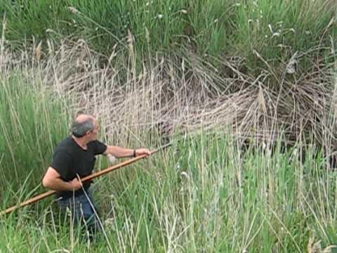 pesca de cangrejos  de rio