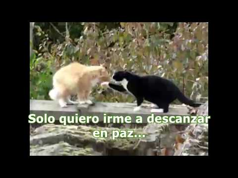 gatos peleando traduccion 4