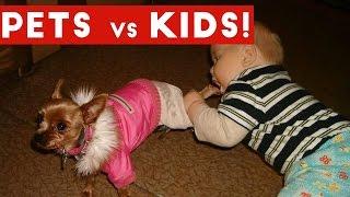 Funniest Pets Vs Kids Video Compilation December 2016   Funny Pet Videos
