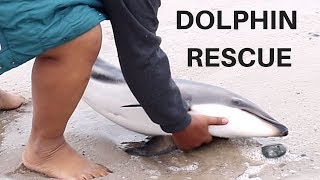 BABY DOLPHIN WASHED ASHORE - FAMILY SAVES BABY DOLPHIN