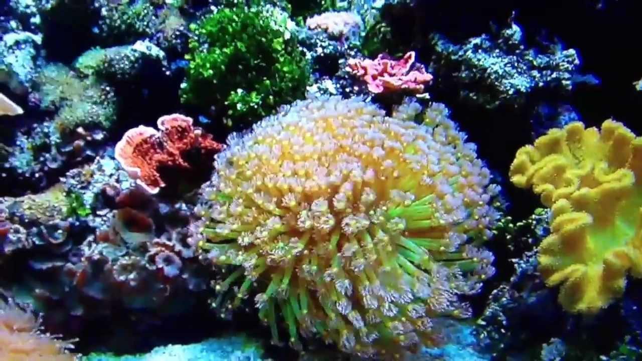 Worlds best saltwater aquarium youtube for Popular saltwater fish