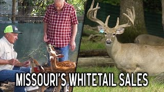The Passion Behind Deer Farming at Whitetail Sales Deer Farm | Deer and Wildlife Stories
