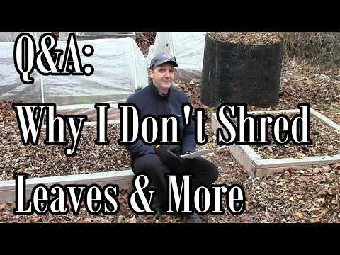 Q&A: Why I Don't Shred Leaves. The Field Trials. & Why I Narrate Videos