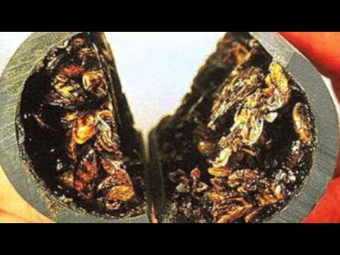 Invasive Species Project Zebra Mussels