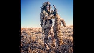 Nosler 55grain Ballistic tip drops coyotes in its tracks!!💥🐺