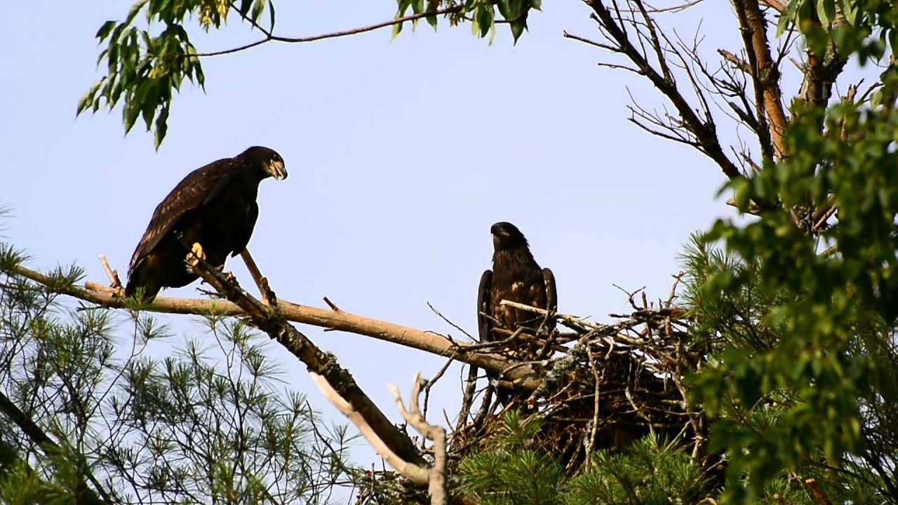 Watauga Lake Fishing Watauga Lake Eaglets