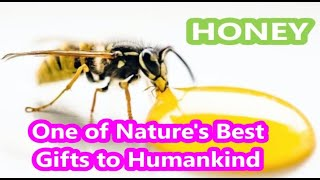 Honey - The Best Treatment For Bad Ailments