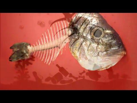 طريقة مجربة لإزالة حسكة السمكة