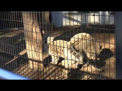 HD 円山動物園 ヤマトとユッコ