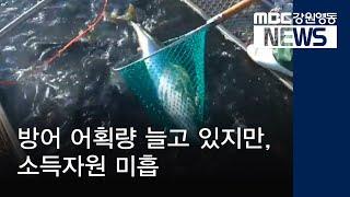 R-도권)방어 어획량 증가, 소득자원 정착 미흡