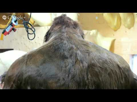 Bigfoot hair proves DNA of unknown primate! - SLP3-12
