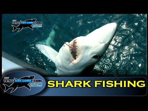 How to catch a Shark! - Totally Awesome Fishing Show