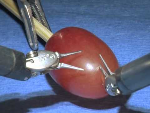 da Vinci Surgical System: Surgery on a grape