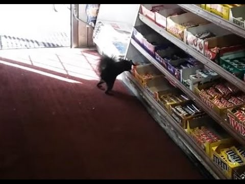 SQUIRREL STEALS CHOCOLATE BAR: Kinder Bueno Kleptomaniac