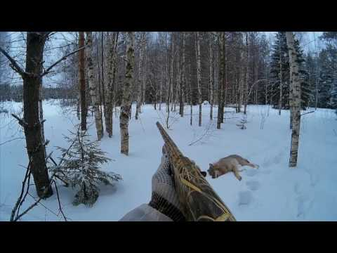 Охота на волков в окладе 5
