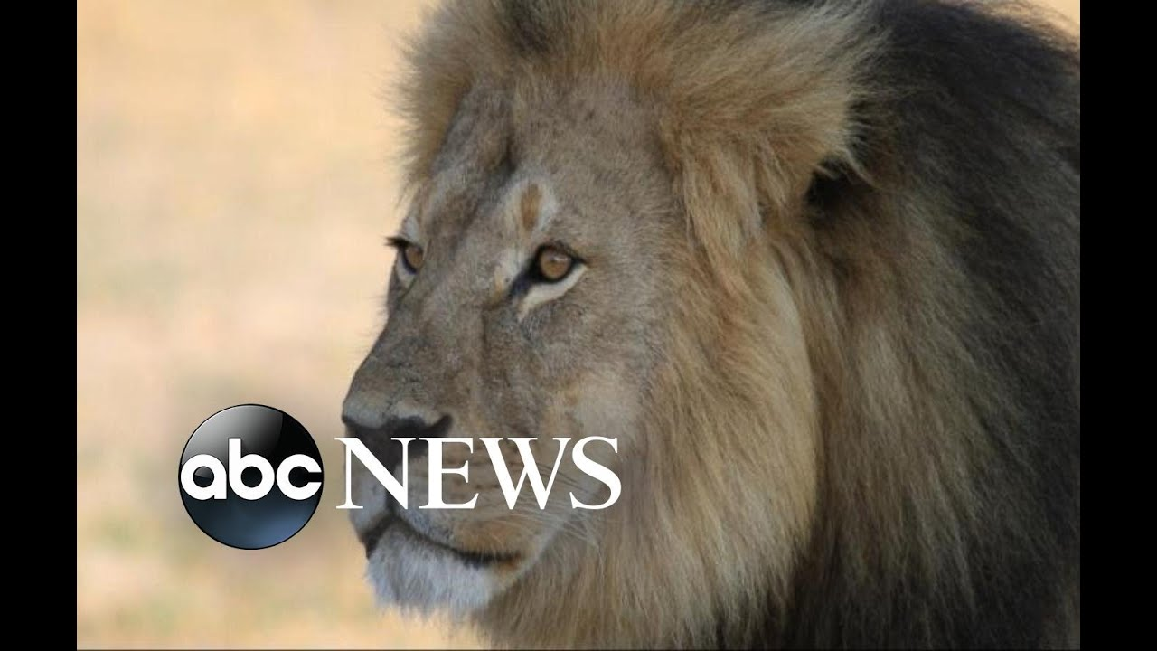 Zimbabwe Conservation Task Force Apologizes for Claiming Lion Jericho Has Been Killed