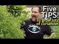 5 Tips How To Grow A Ton Of Coriander Or Cilantro In Container Garden Bed mp3