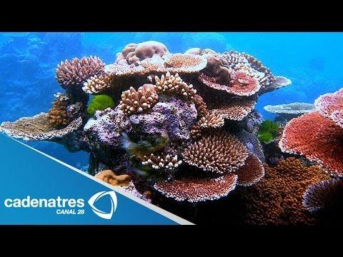 IMPRESIONANTES imágenes del mundo de los corales de Australia