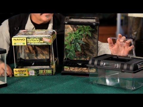 How to Pick Out & Set Up a Terrarium | Pet Tarantulas