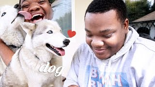 CLICK THIS FOR DOG! BOYFRIEND TAG BUT WITH DOG!