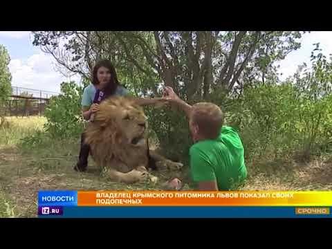 Как живет крупнейший в Европе крымский питомник львов Тайган