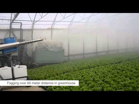 pulsFOG Plant Protection Application in Greenhouse for lettuce