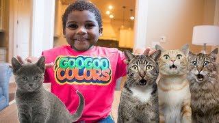 GOO GOO GAGA MAGICALLY APPEAR 10 PET CATS! LEARN TO SPELL CAT! GOO GOO COLORS