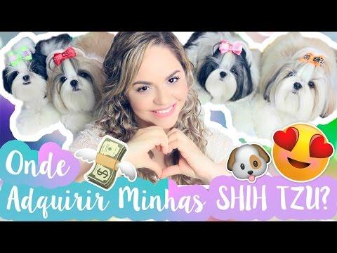 Onde Comprei Minhas Shih Tzu + Dicas Para Comprar Um Shih Tzu Ou Cães de Raça #VEDA20 ? Lói Cúrcio