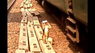 Monkey Ki Masti / Funny Video Clip 2012