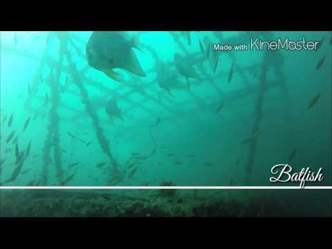 Found Marine Police Wreck PA25 @ Pulau Tinggi