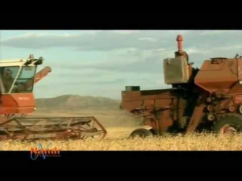 Ugtaaliin Namar video