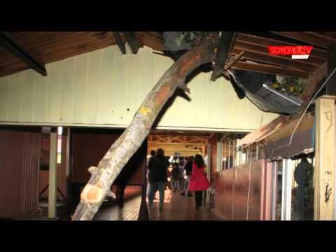 Un árbol destruyó pabellón del Instituto Politécnico de Osorno a causa del viento