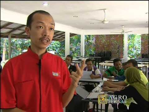 Rtm  Agro Journal Madu Kelulut Min House Camp  Part2 2