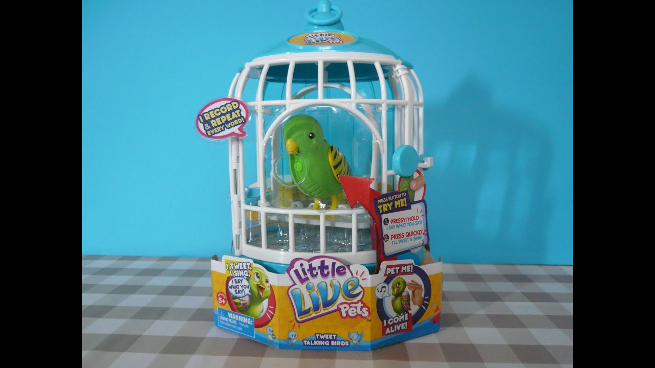 Big Pet Birds Little Live Pets Bird Cage